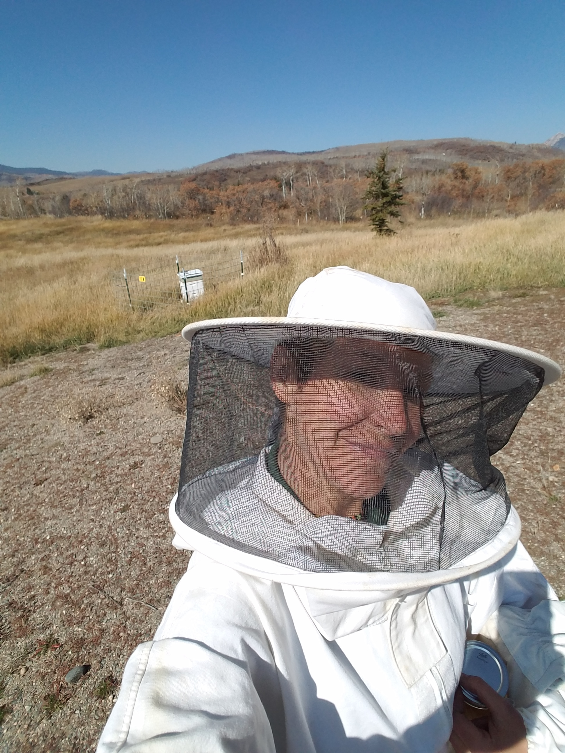 My honeybee refuge
