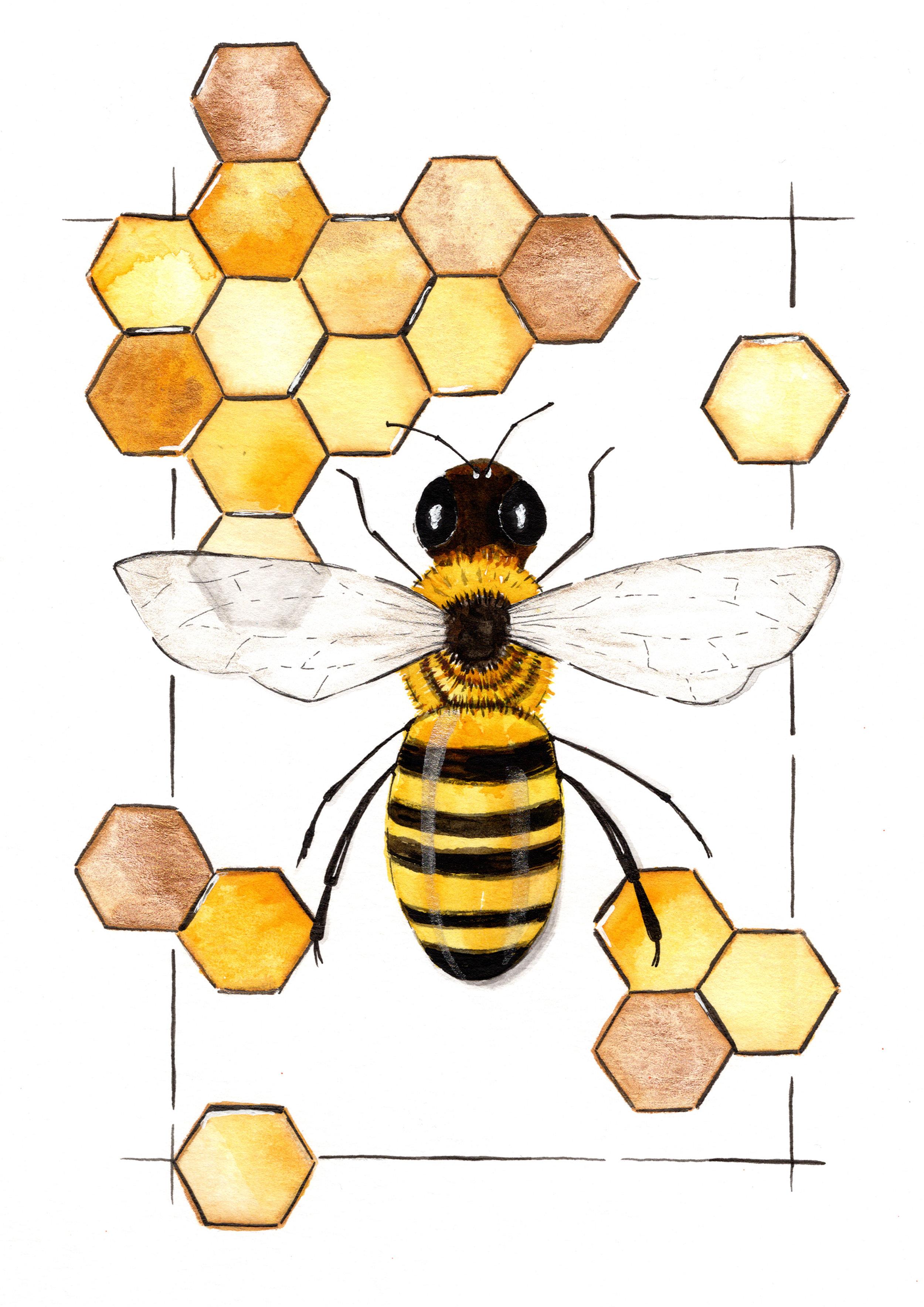 Honeycomb by Teresa Navajo