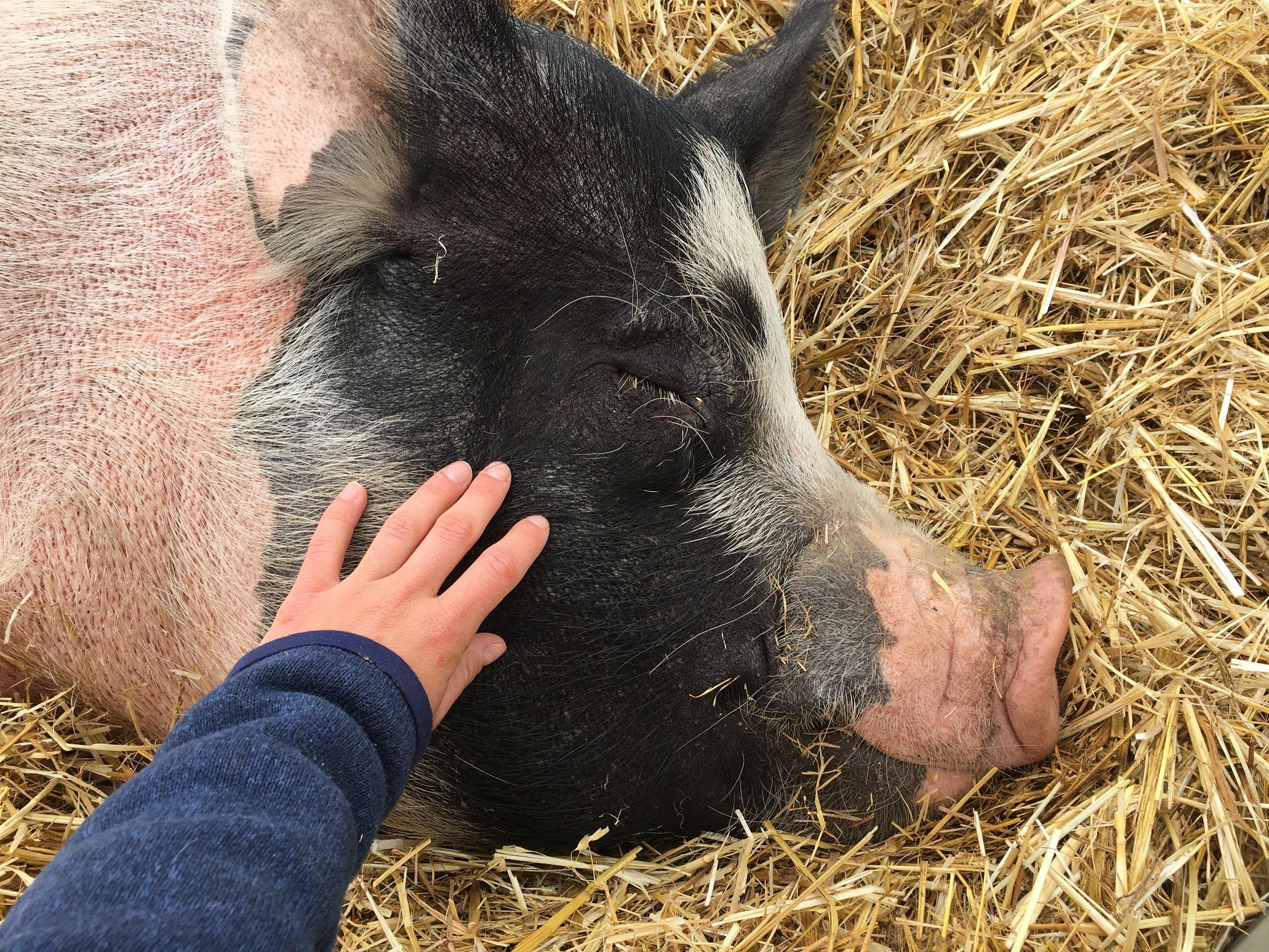 Loving Farm Animal Sanctuary - Media Management and Strategy