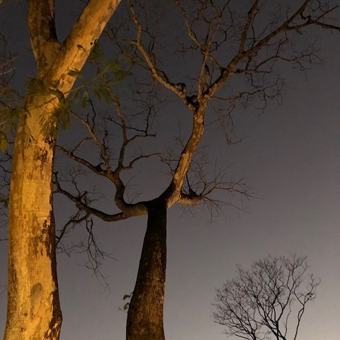 Thank you Ursula for snapping this funky shot of a couple trees that outline our space.