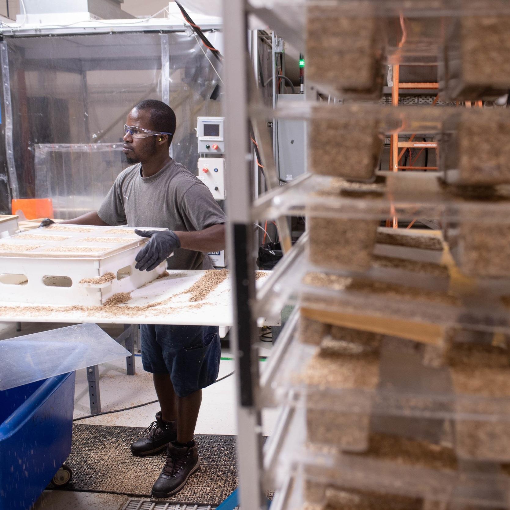 Become a Mycelium Producer -