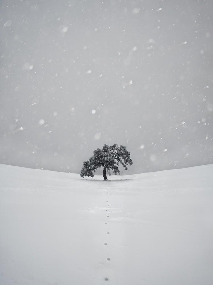 Mt Buller lone tree