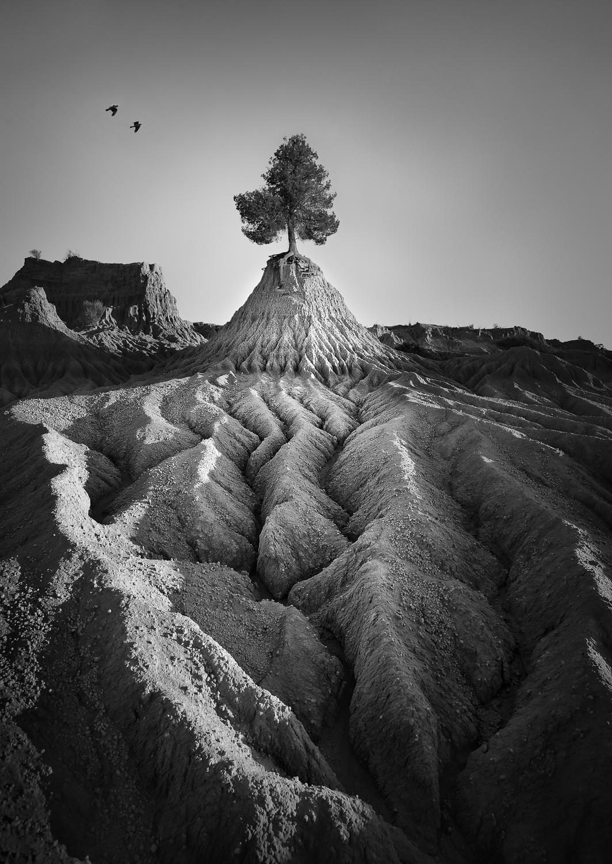Mungo Tree