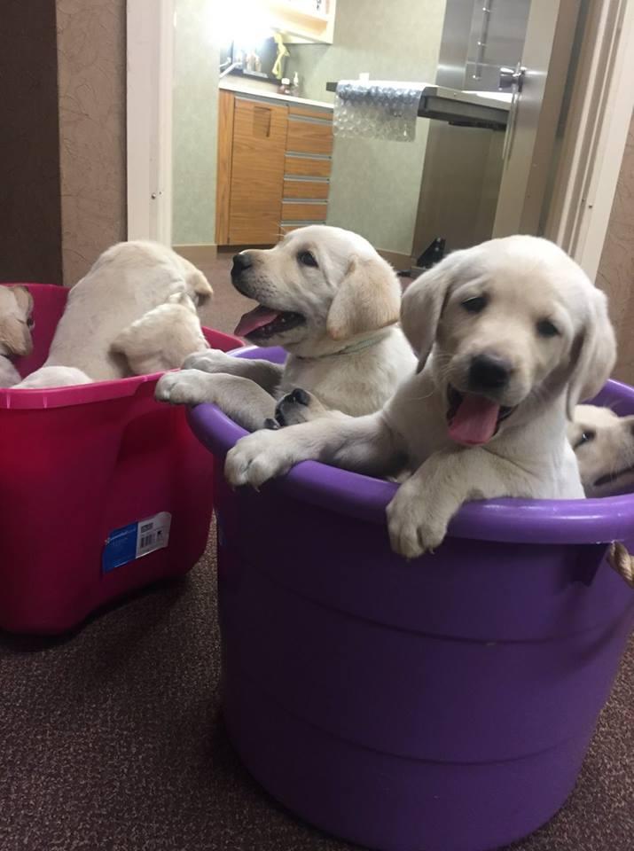 bucket of puppies 1.jpg