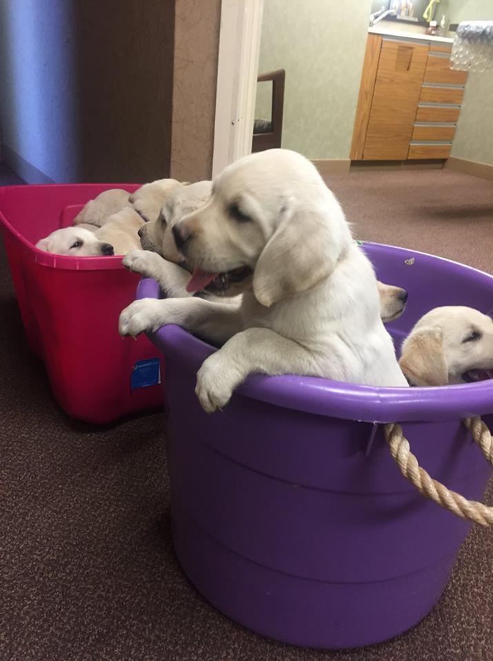 bucket of puppies 2.jpg