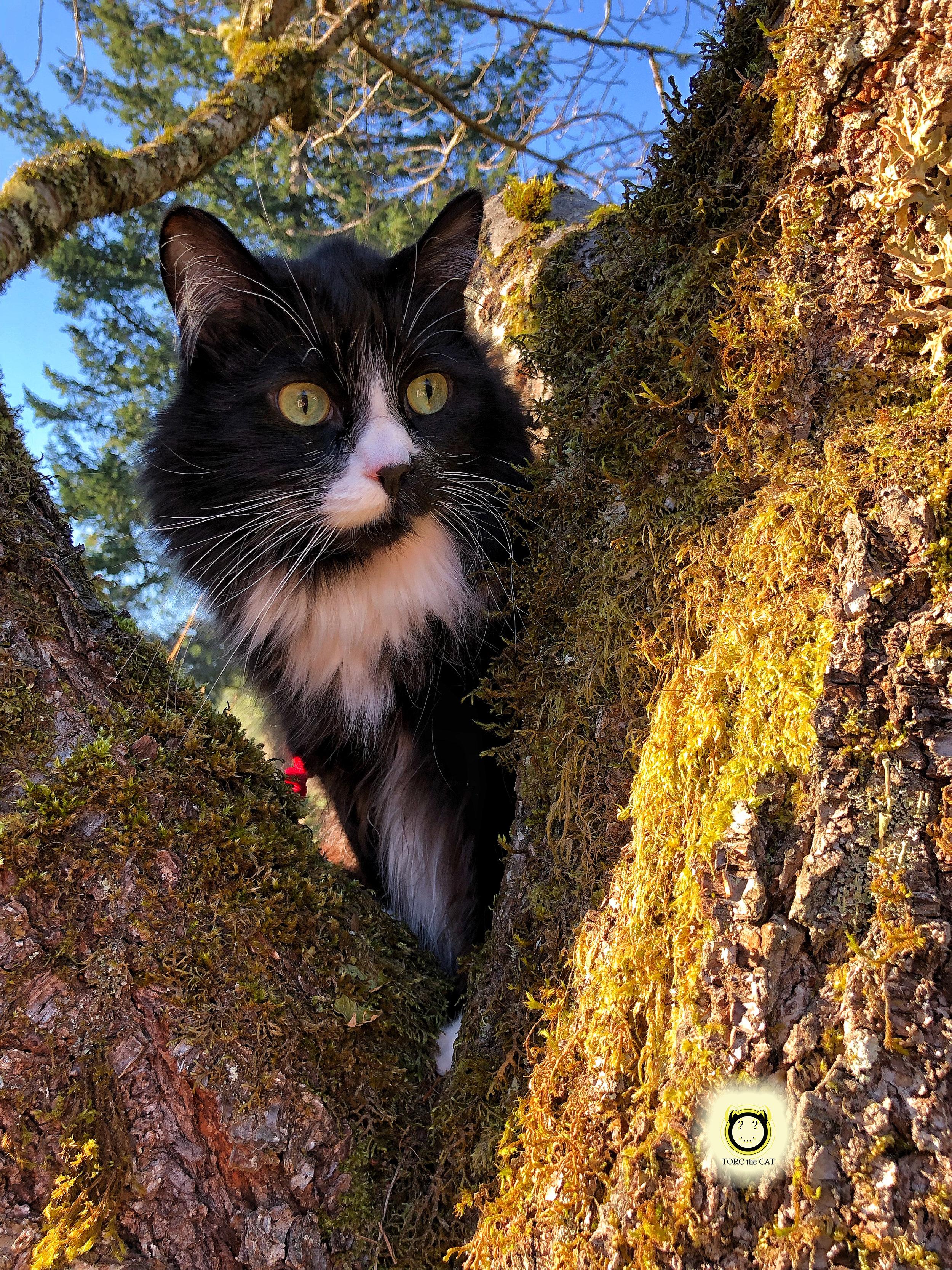 TORC the CAT adventure.jpg