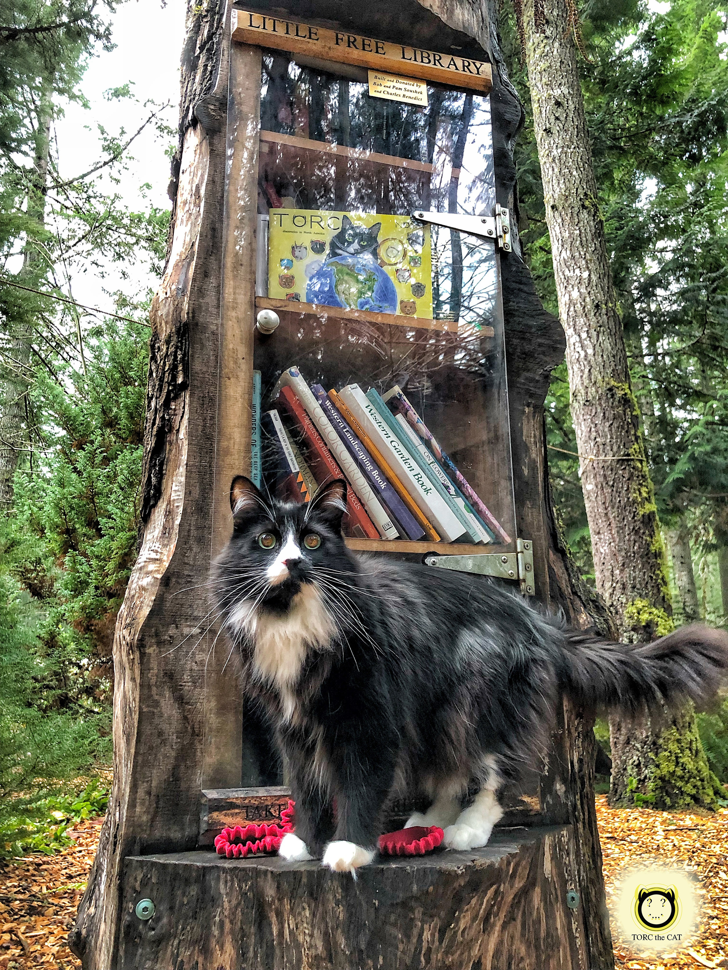TORC the CAT spotted leaving two   #TorcBooks   and coloring books as a gift to the children that visit the Little Free Library located in Lake Wilderness Arboretum,  Maple Valley , on 25 December 2018.