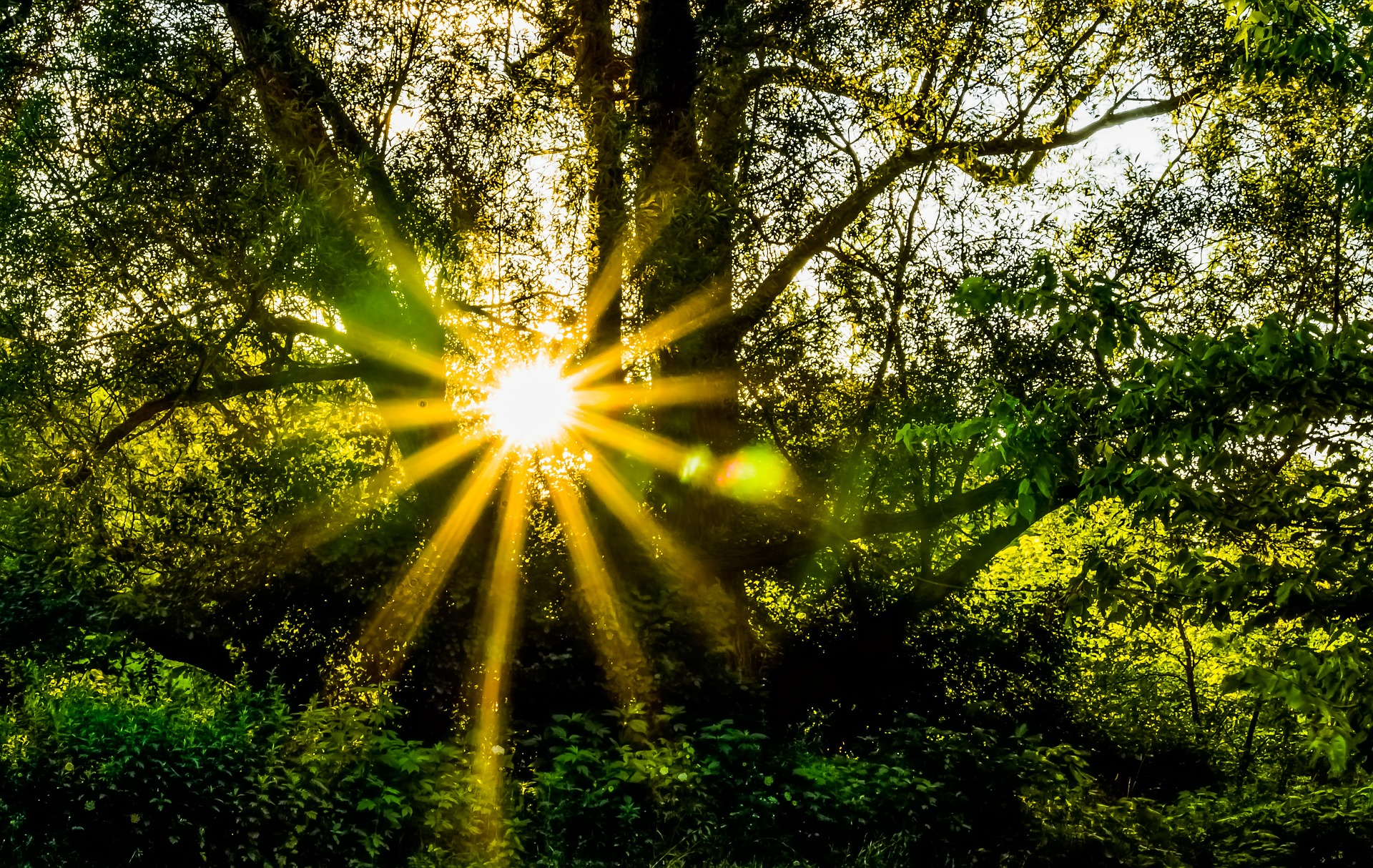 Sunburst moments - What are the moments in each day that makes someone's day? How do you maximise that feeling of optimism to build towards greater success?