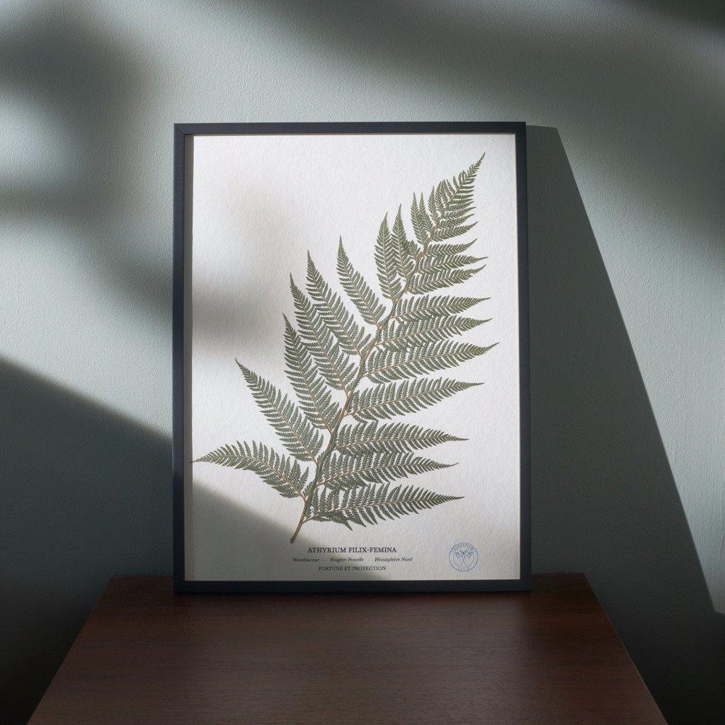 herbarium_155_v1_rgb_ebc05486-7e90-4c5c-b0a9-7f72dab7d1d3_1024x10242x.jpg