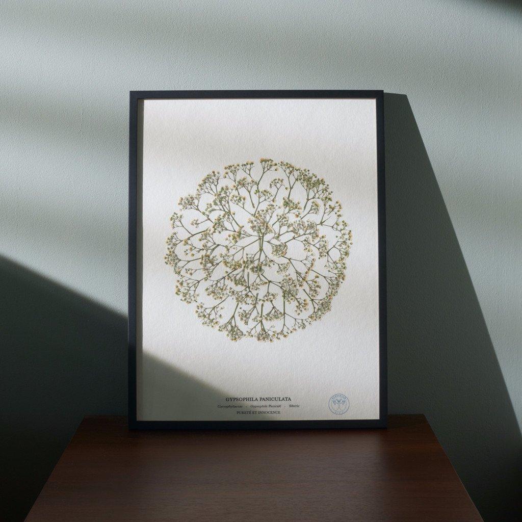 herbarium_174_v2_rgb_0fa6489e-5584-4881-a933-6385e11ff75f_1024x10242x.jpg