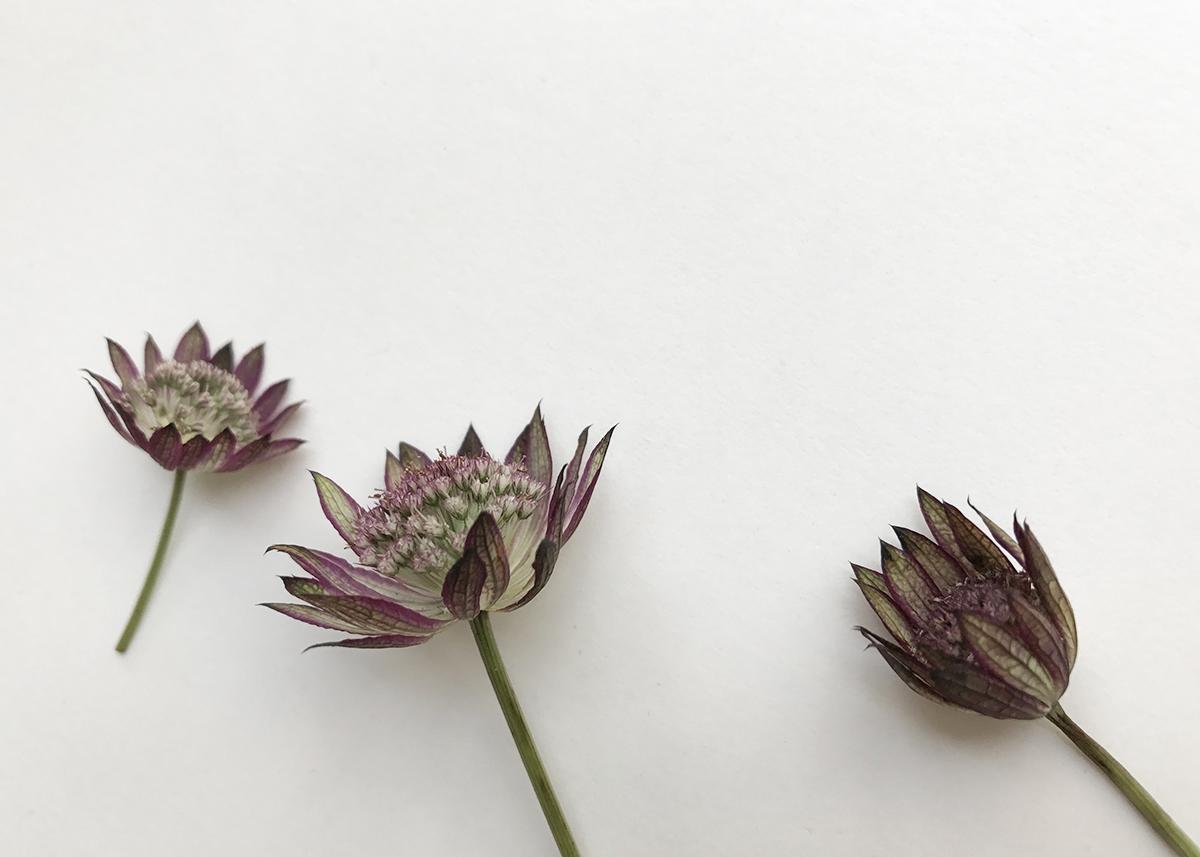 herbier-tendance-diy-vegetal-1.jpg