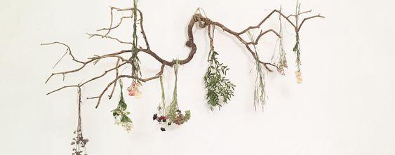trouver-fleurs-sc3a9chc3a9es-jeanneparis-11.jpg