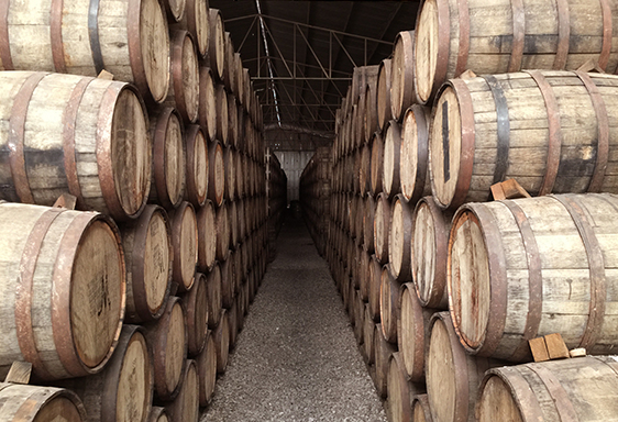 Vineyards -