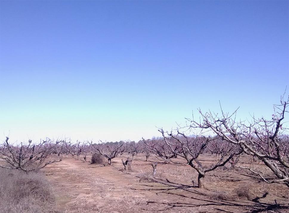 AGVALUE_orchards_5.jpg
