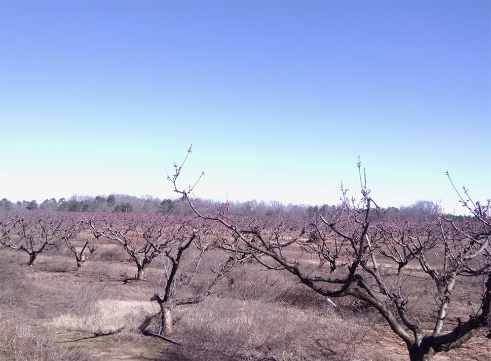 AGVALUE_orchards_555.jpg