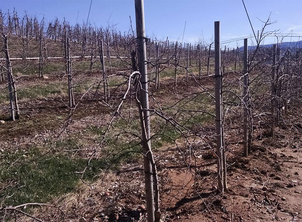 AGVALUE_orchards_555555.jpg