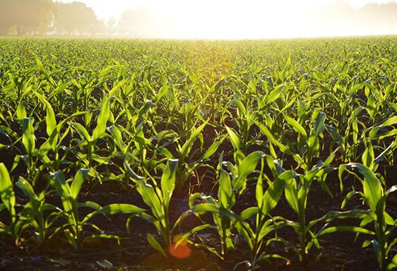 Farmland -