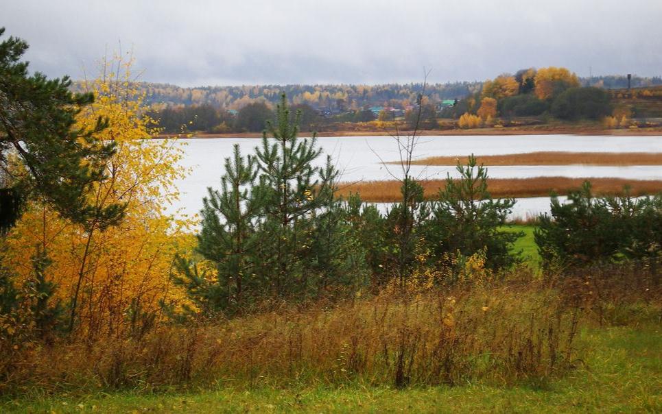Осенний лес.jpeg