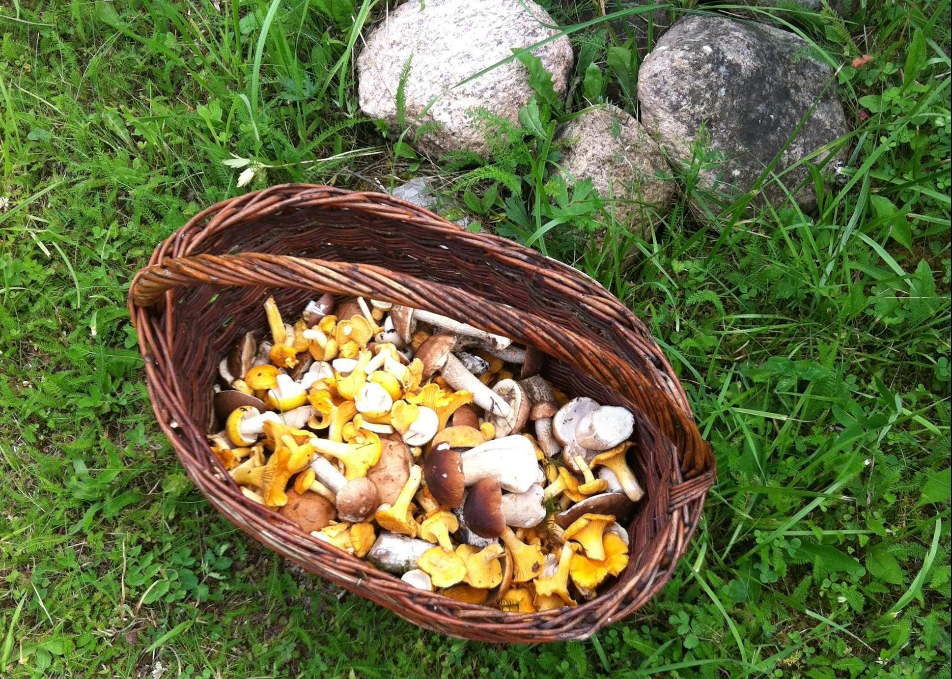 лисички-и-белые-грибы-в-корзинке-собранные-гостями-загородного-отеля-на-озере.jpg