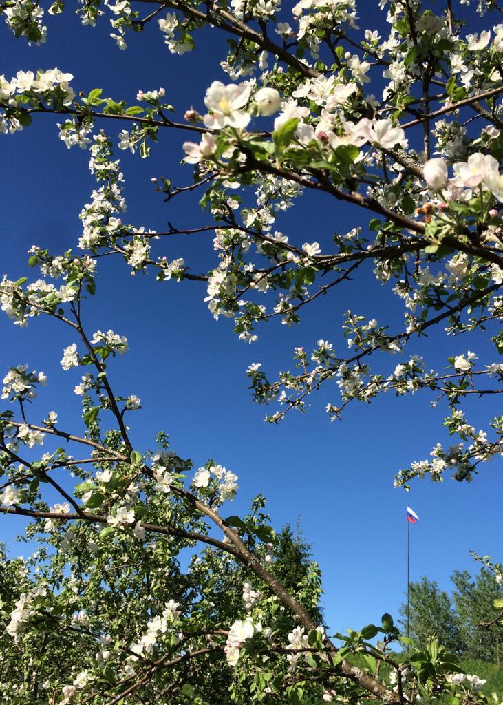 яблони-в-цвету-весенним-днем-в-загородном-отеле.jpg
