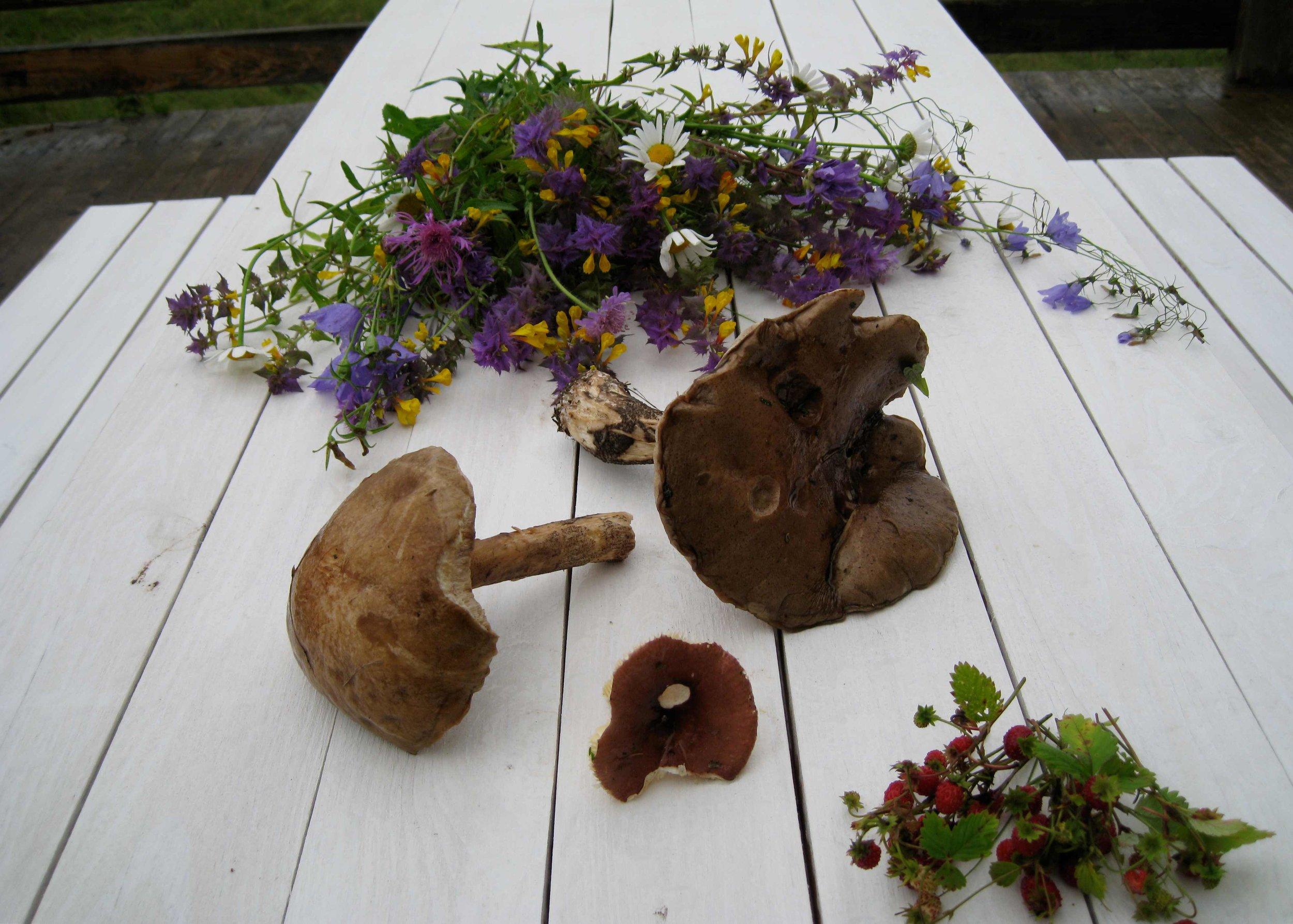 грибы-и-земляника-собранные-гостями-загородного-отеля-на-озере.jpg