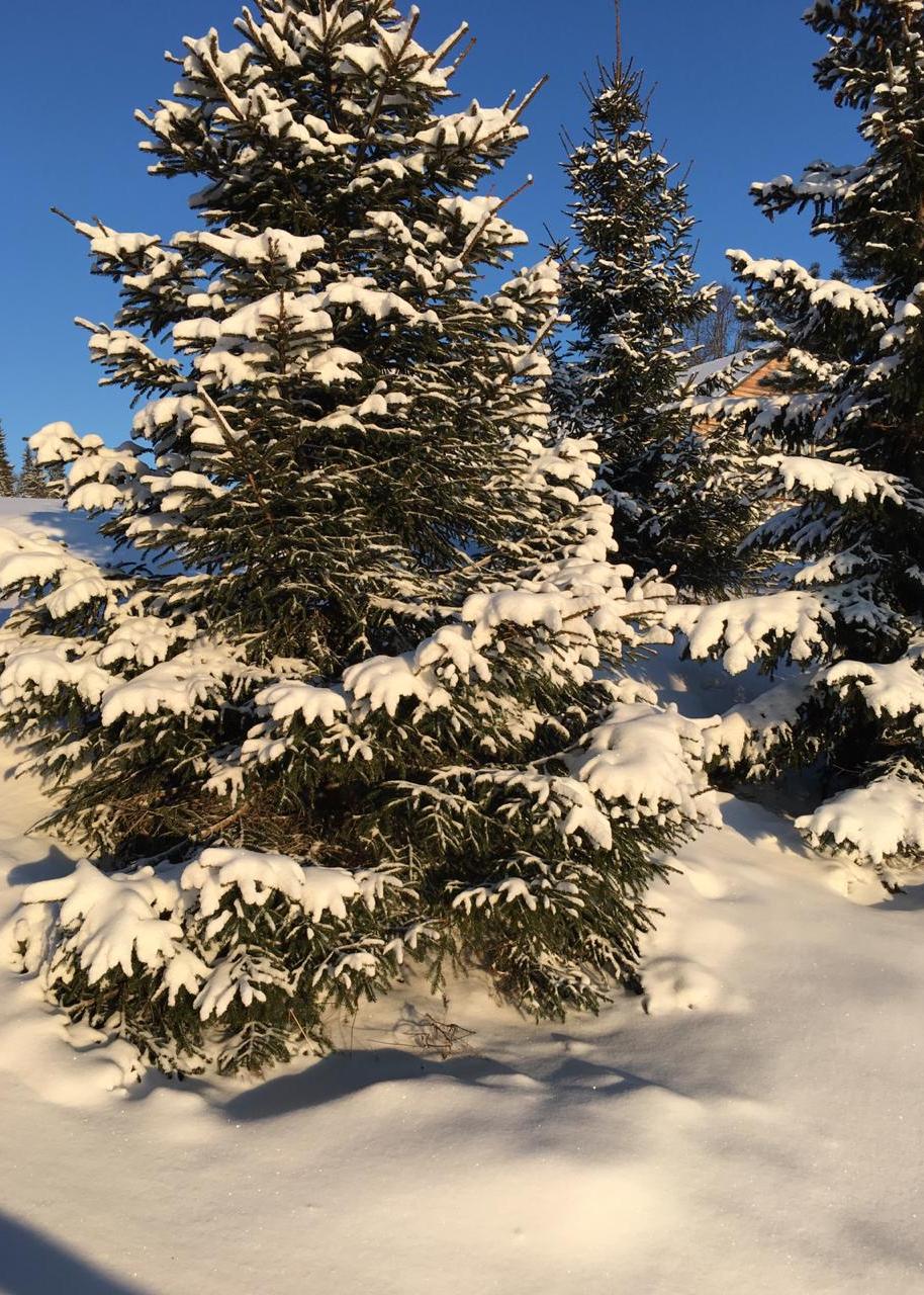 зимний-пейзаж-с-елкой-в-загородном-отеле.jpg