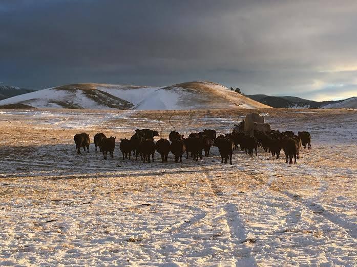 WMR Herd III.jpg