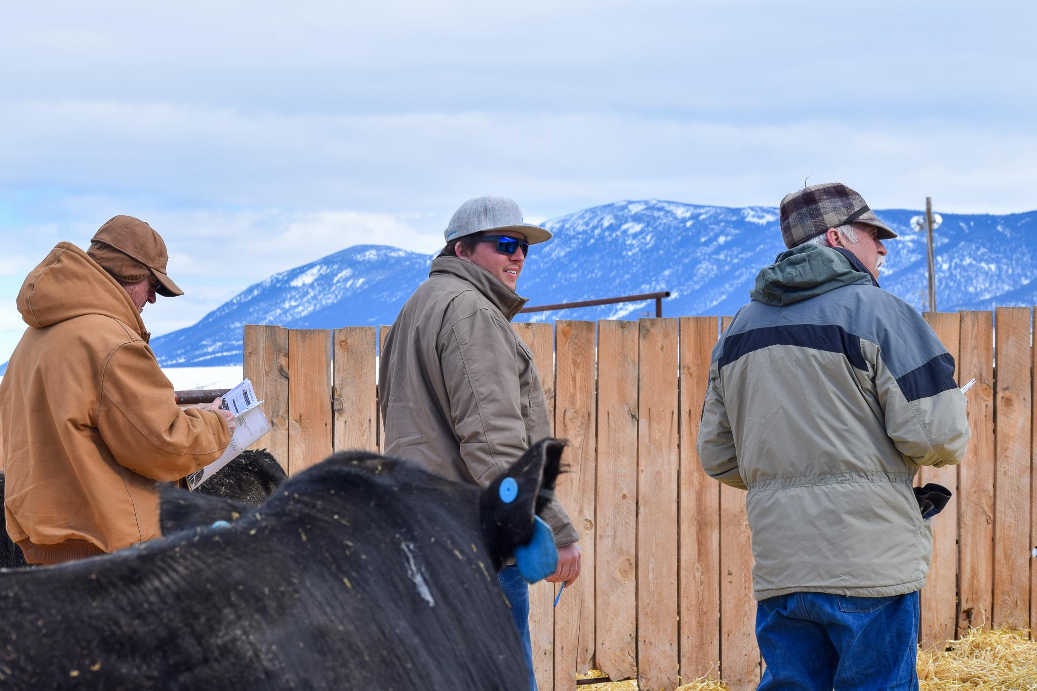 WMR Bull Sale 2019 (8).jpg