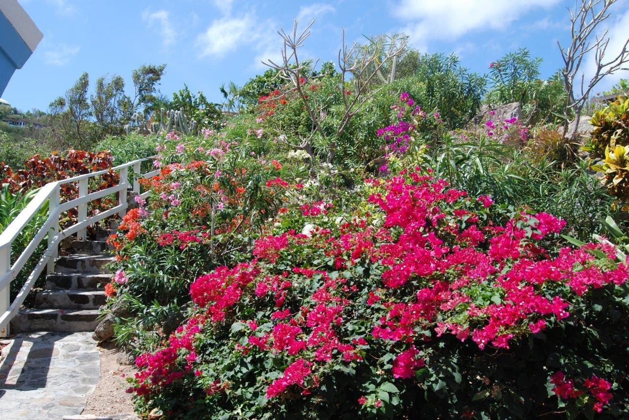 Serendipity Garden.jpg