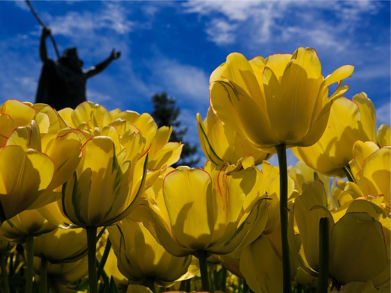 spring energy forecast new york