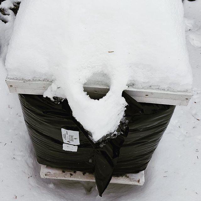 Post-vortex! And this melted snow is a good sign: heat is escaping, there is life inside! 🐝  #localhoney #honeybees #chicagoland #polarvortex #beehive #myhoneytrails #honeytrails