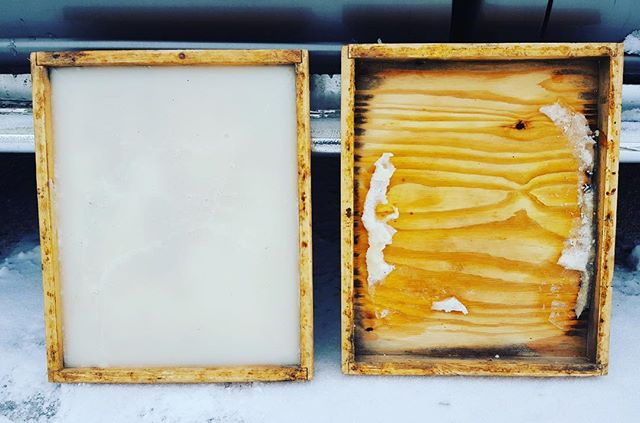 Another cold blast in the Midwest. 😒😔 🐝  Surviving colonies are very hungry now , especially since queens are laying eggs again. The empty candy board began as 15 lbs back in December. We replaced it two weeks ago with a new one. Don't let the survivors starve out now!  #chicagowinters #localhoney #honeybees #beekeeper #chicagoland #beehives #candyboards #myhoneytrails