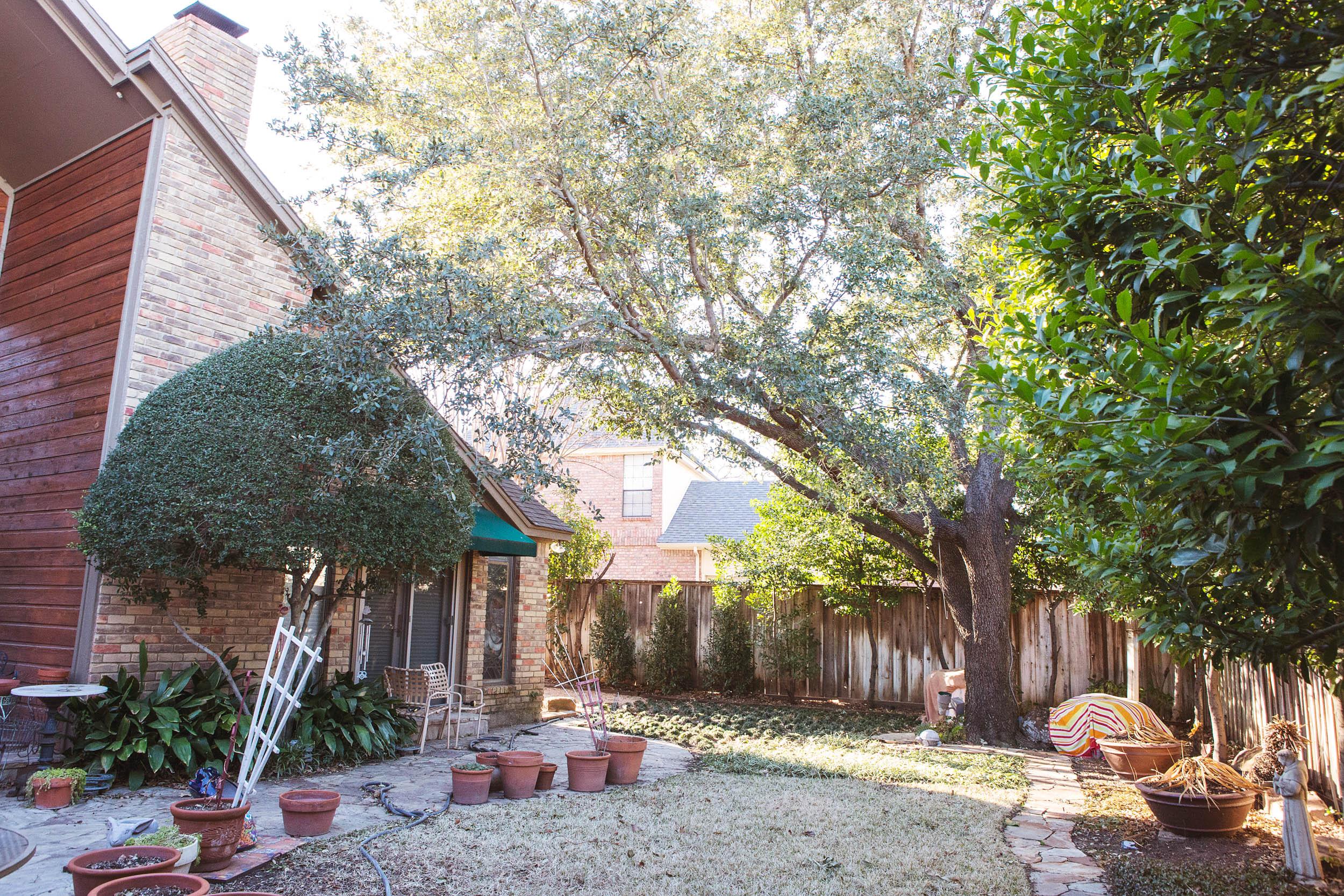 Tree Trimming in Southlake Texas (4 of 8).jpg