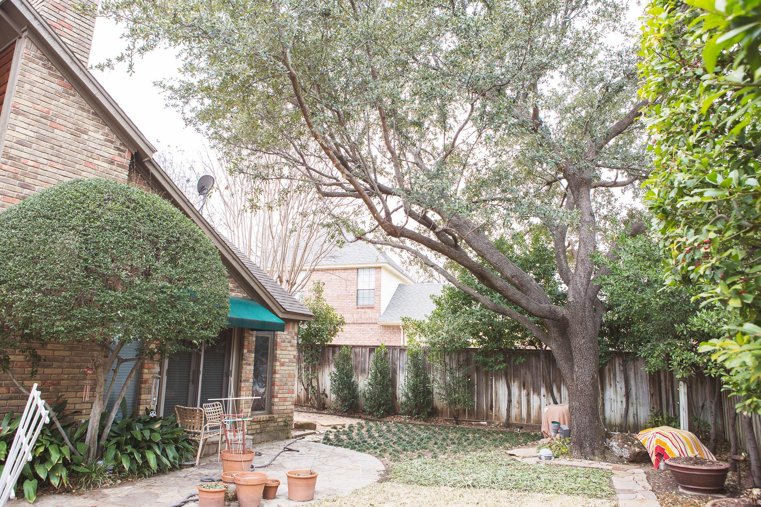 Tree Trimming in Southlake Texas (5 of 8).jpg