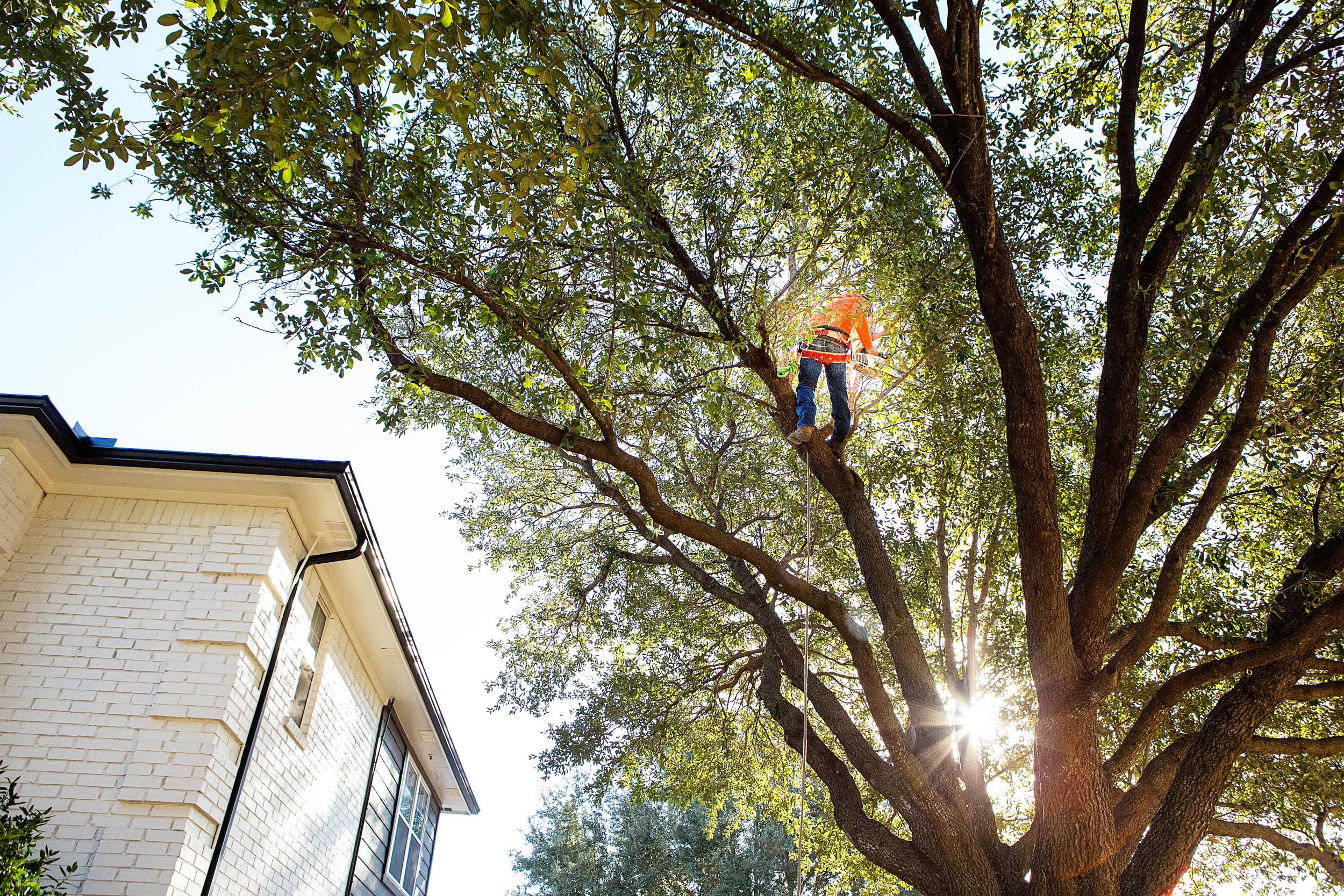 Tree Trimming in Southlake Texas (5 of 23).jpg