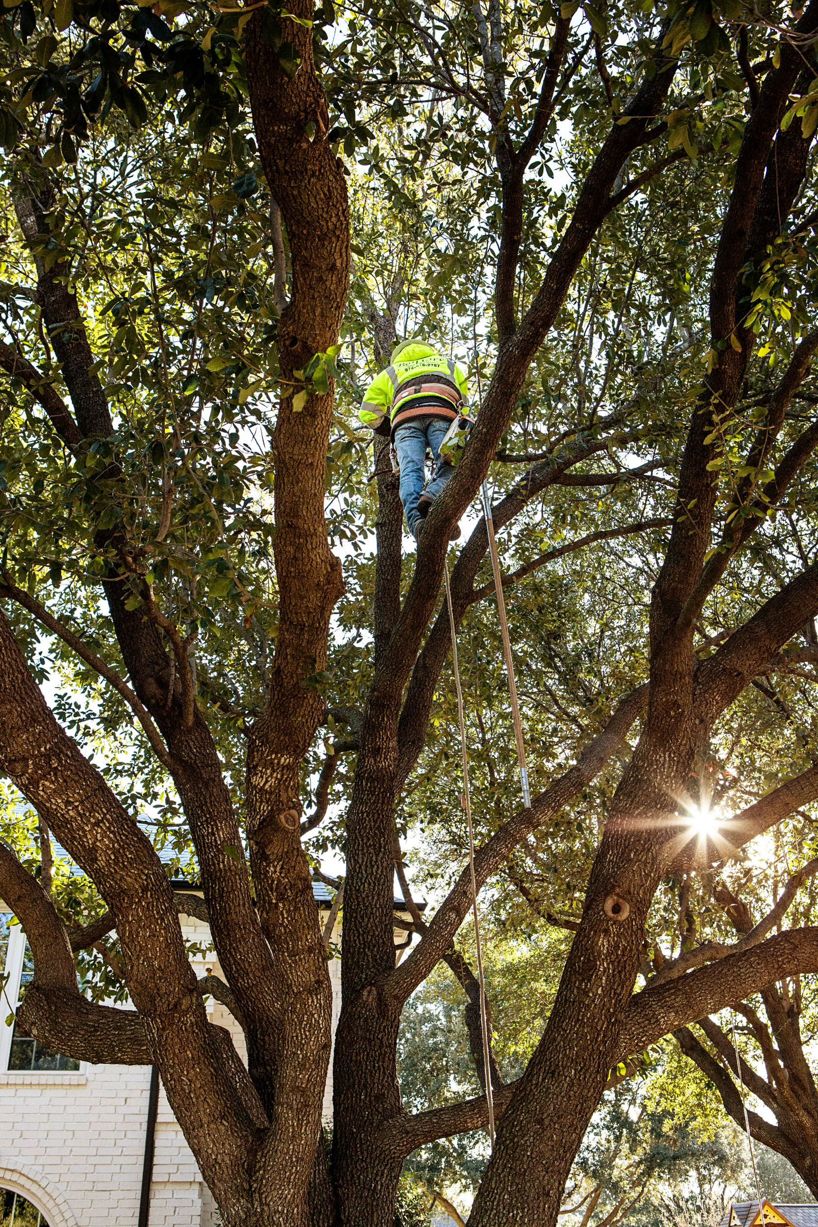 Tree Trimming in Southlake Texas (8 of 23).jpg
