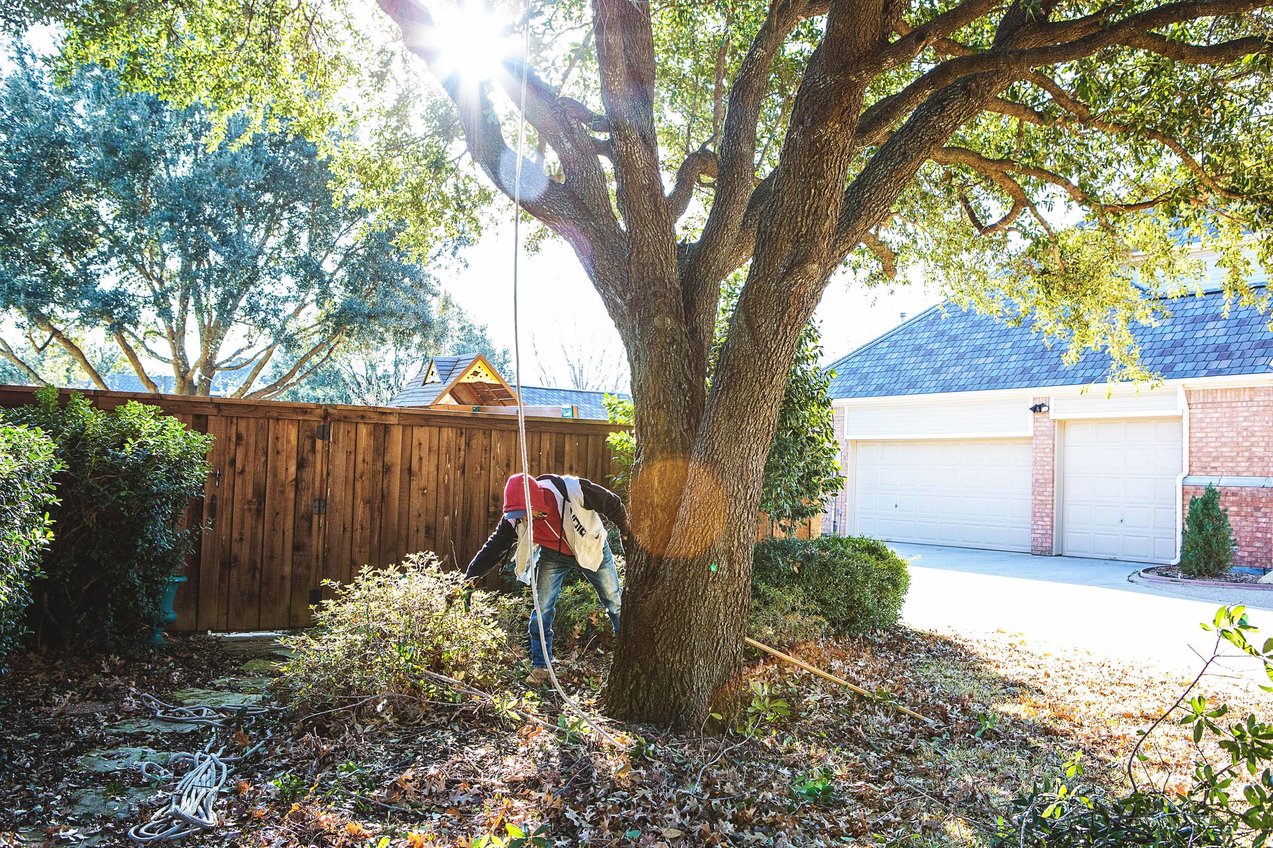 Tree Trimming in Southlake Texas (10 of 23).jpg