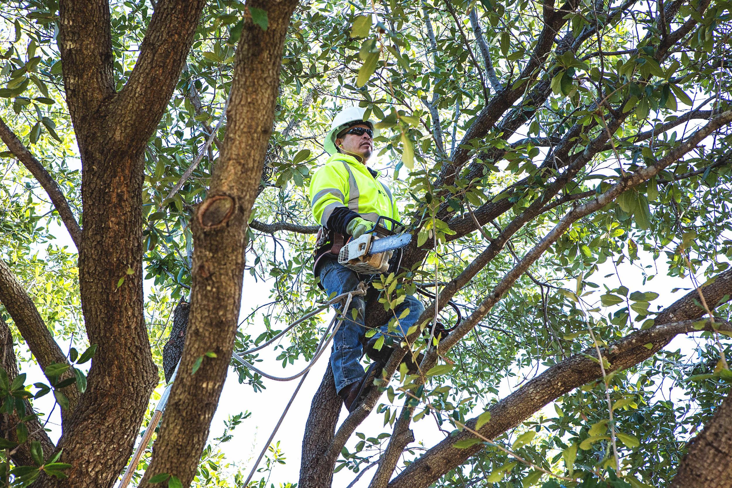 Tree Trimming in Southlake Texas (13 of 23).jpg