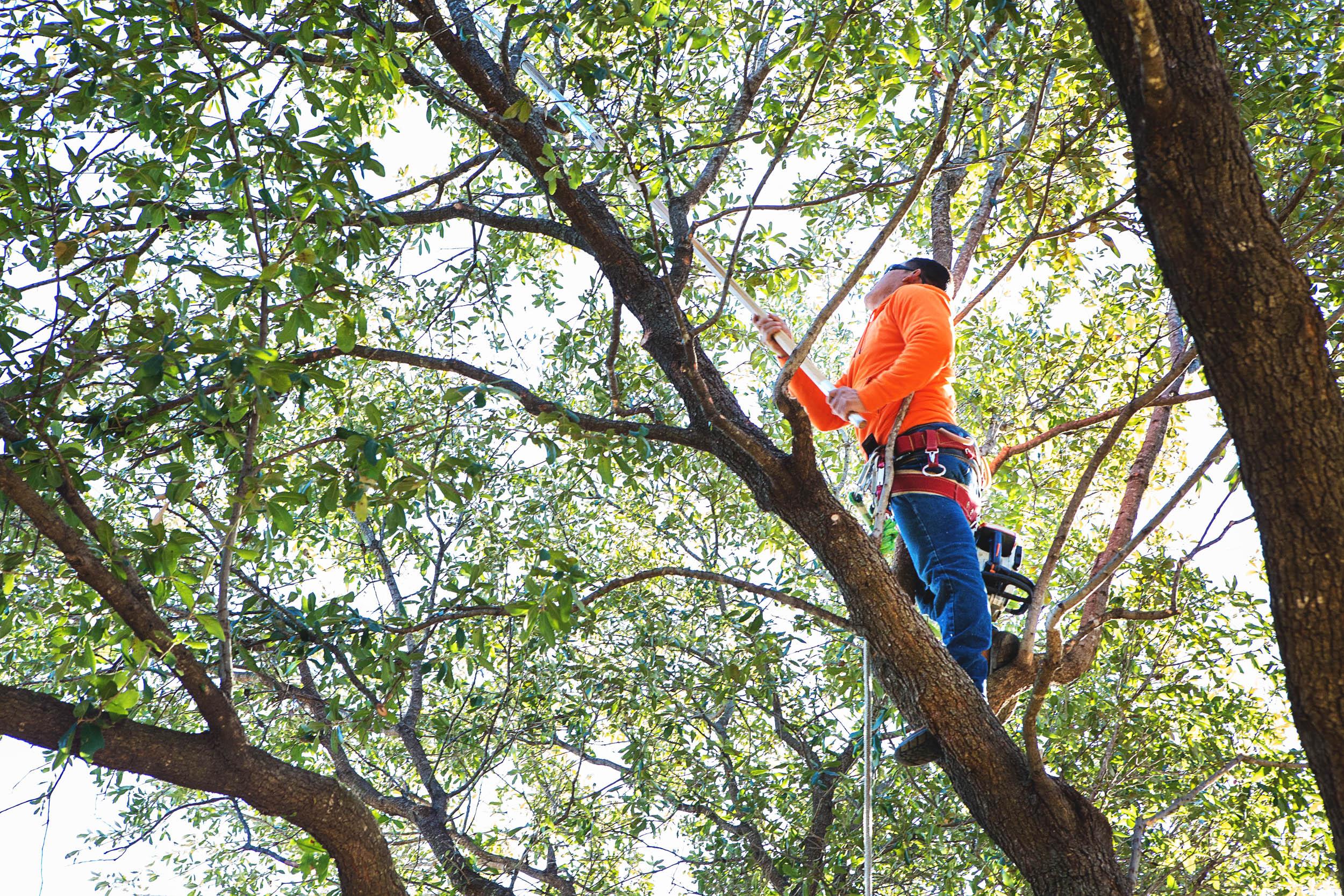 Tree Trimming in Southlake Texas (14 of 23).jpg