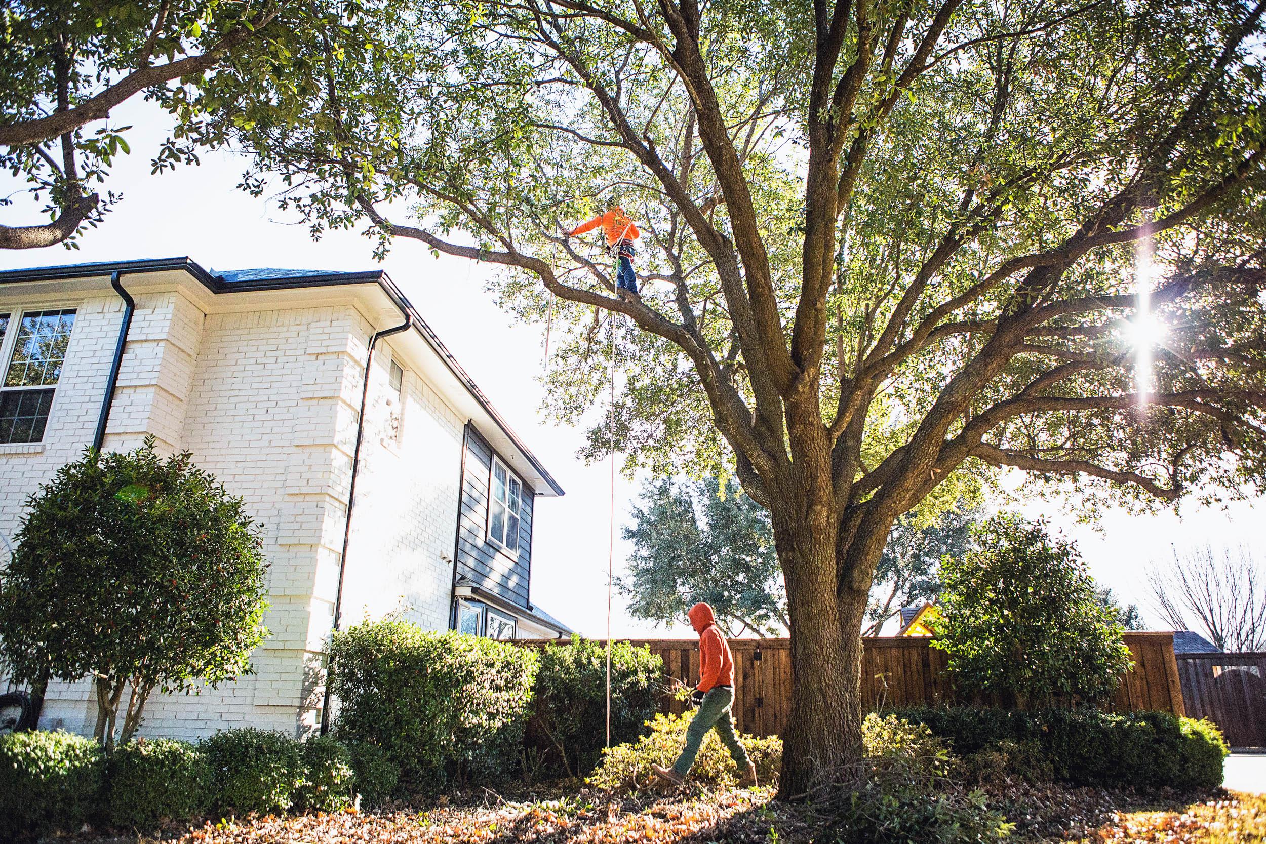 Tree Trimming in Southlake Texas (17 of 23).jpg