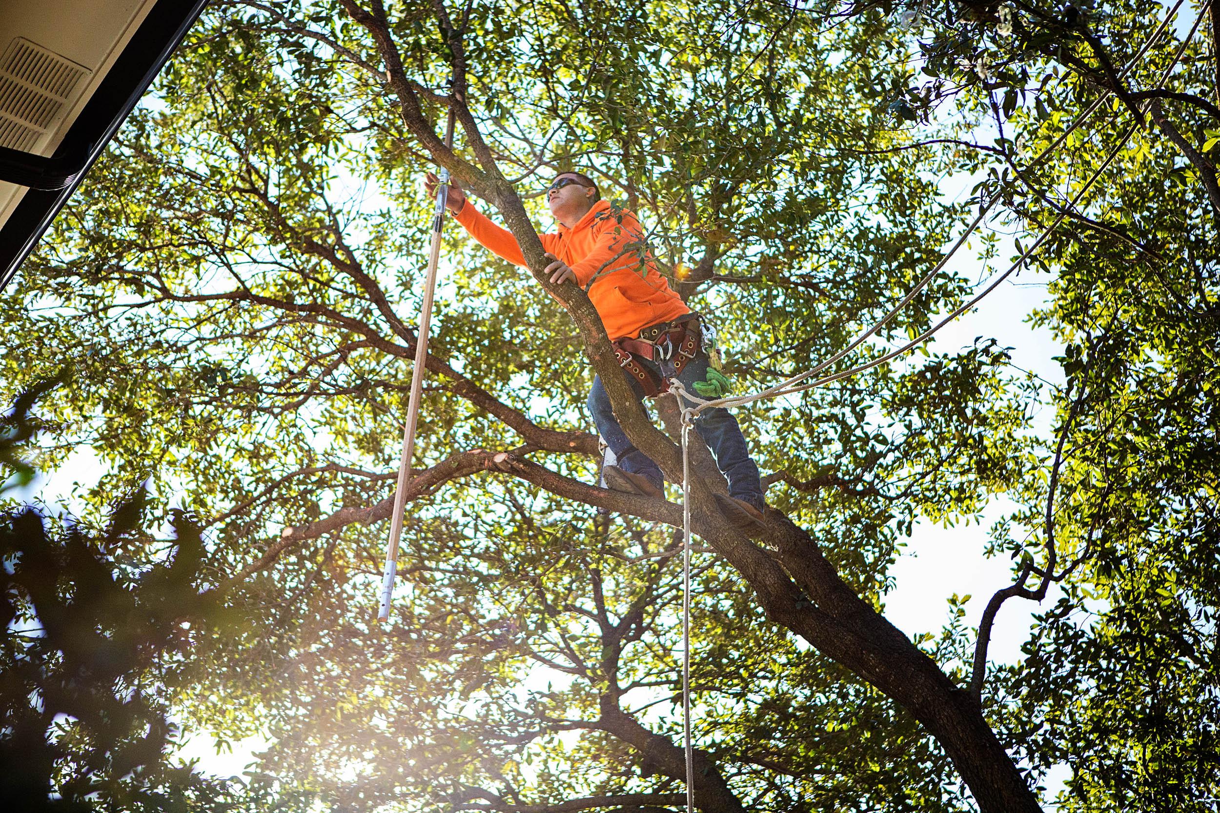 Tree Trimming in Southlake Texas (18 of 23).jpg