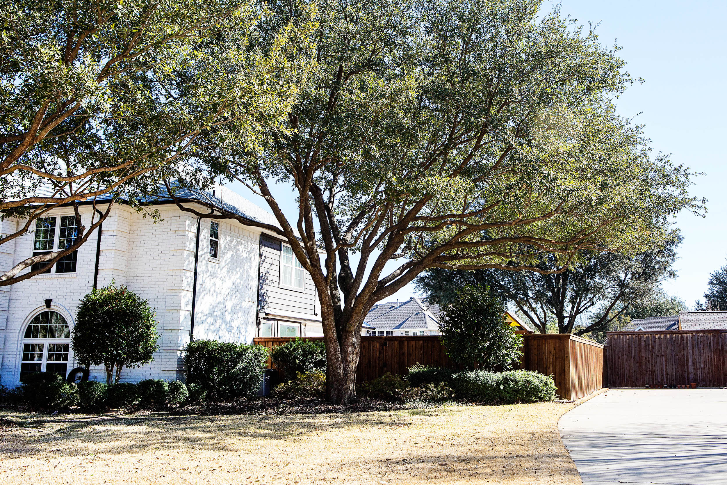 Tree Trimming in Southlake Texas (22 of 23).jpg