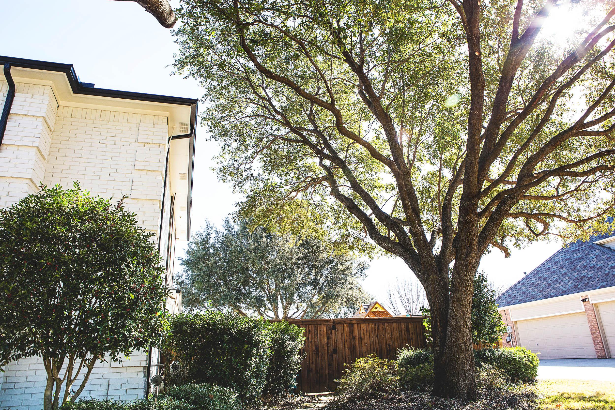Tree Trimming in Southlake Texas (23 of 23).jpg