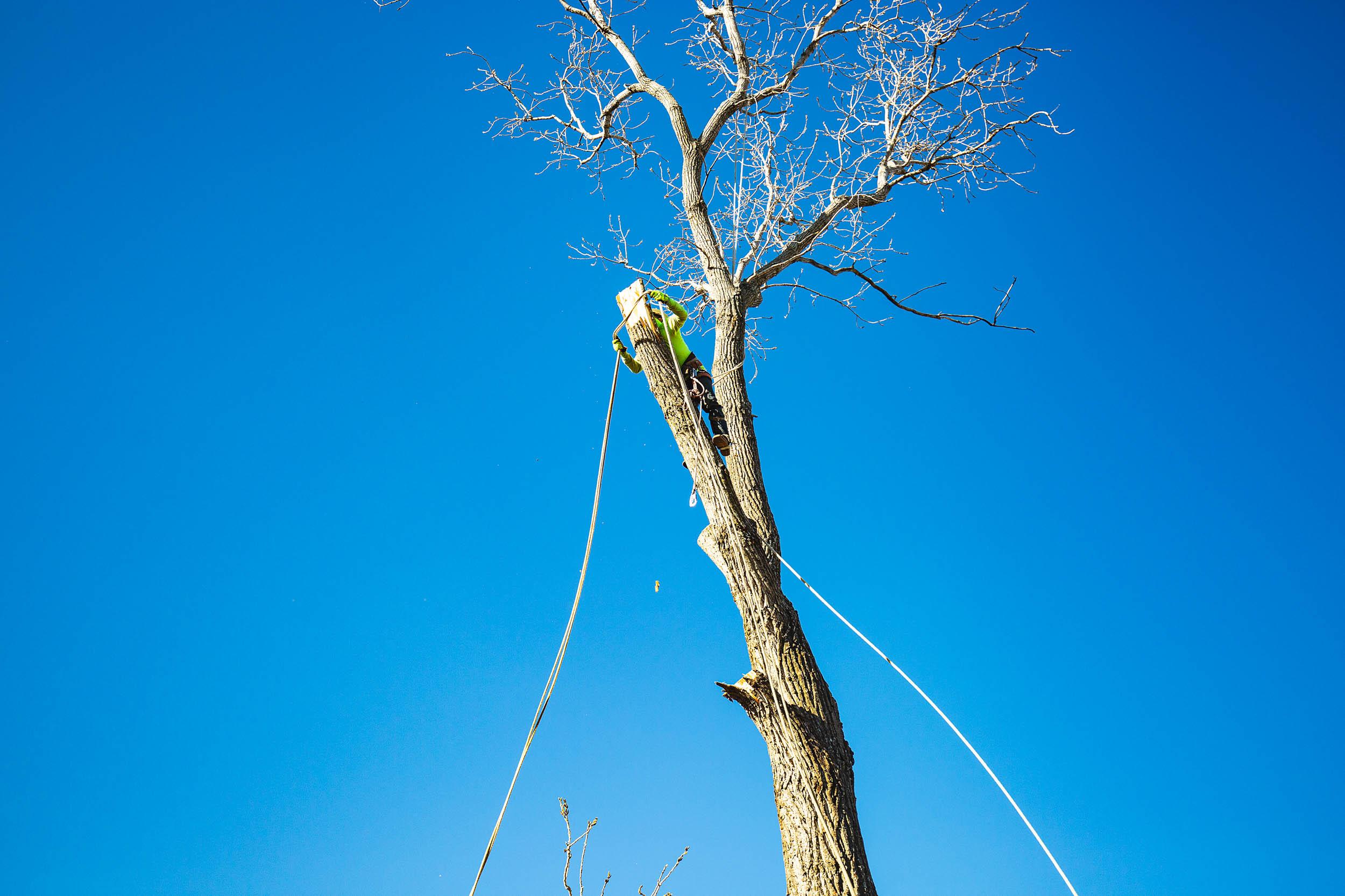 Tree Trim Service in keller Texas (23 of 49).jpg