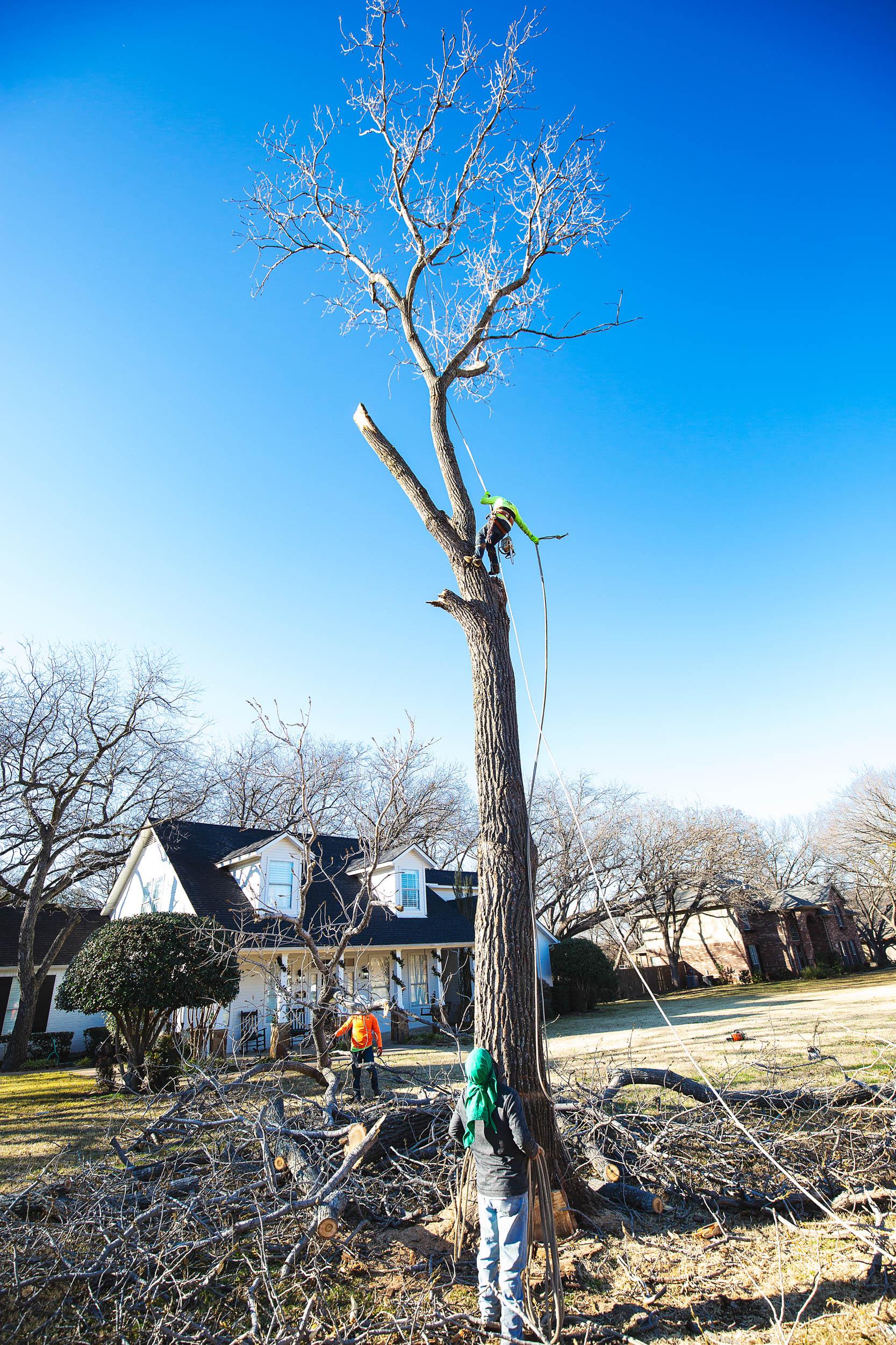 Tree Trim Service in keller Texas (25 of 49).jpg