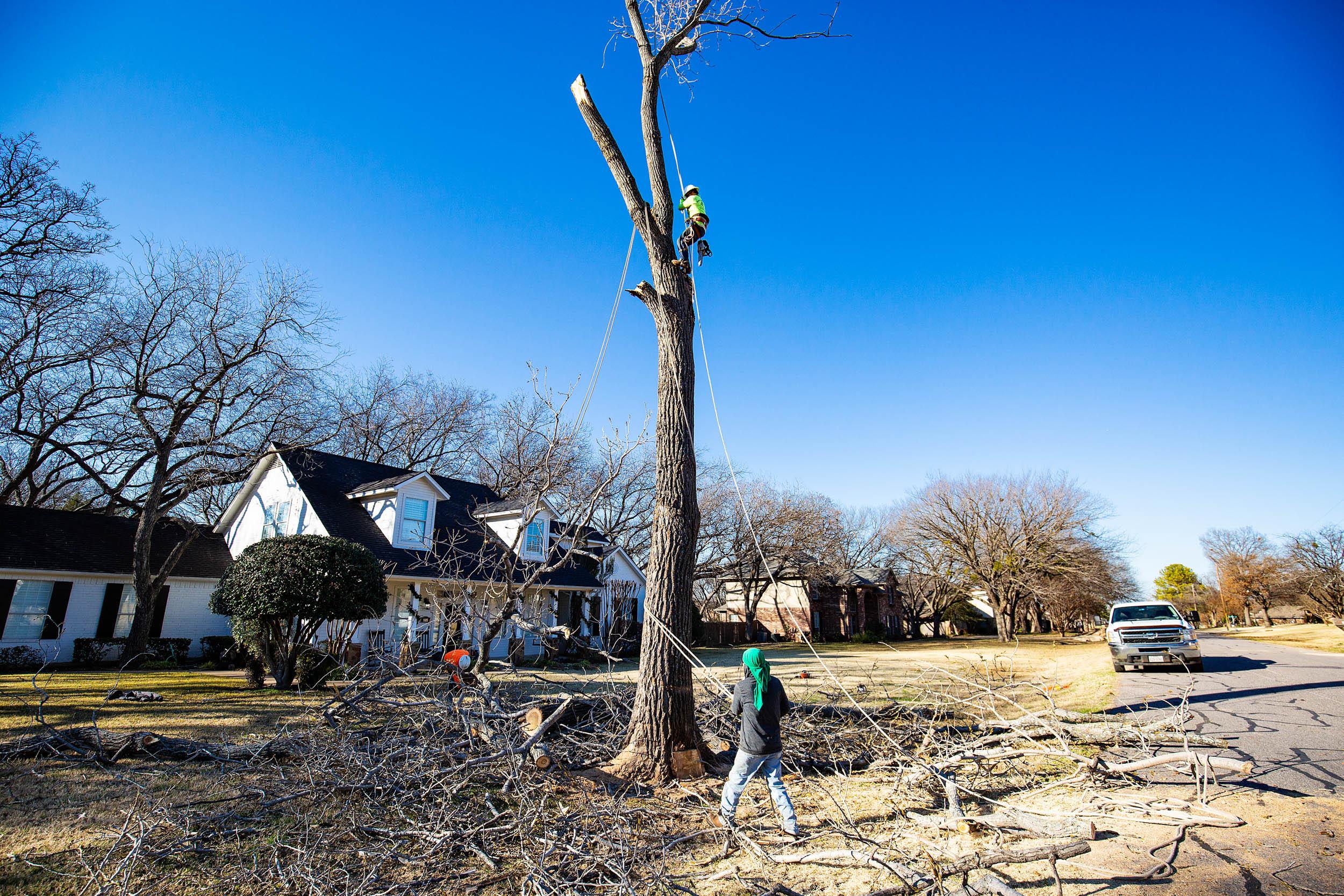 Tree Trim Service in keller Texas (24 of 49).jpg