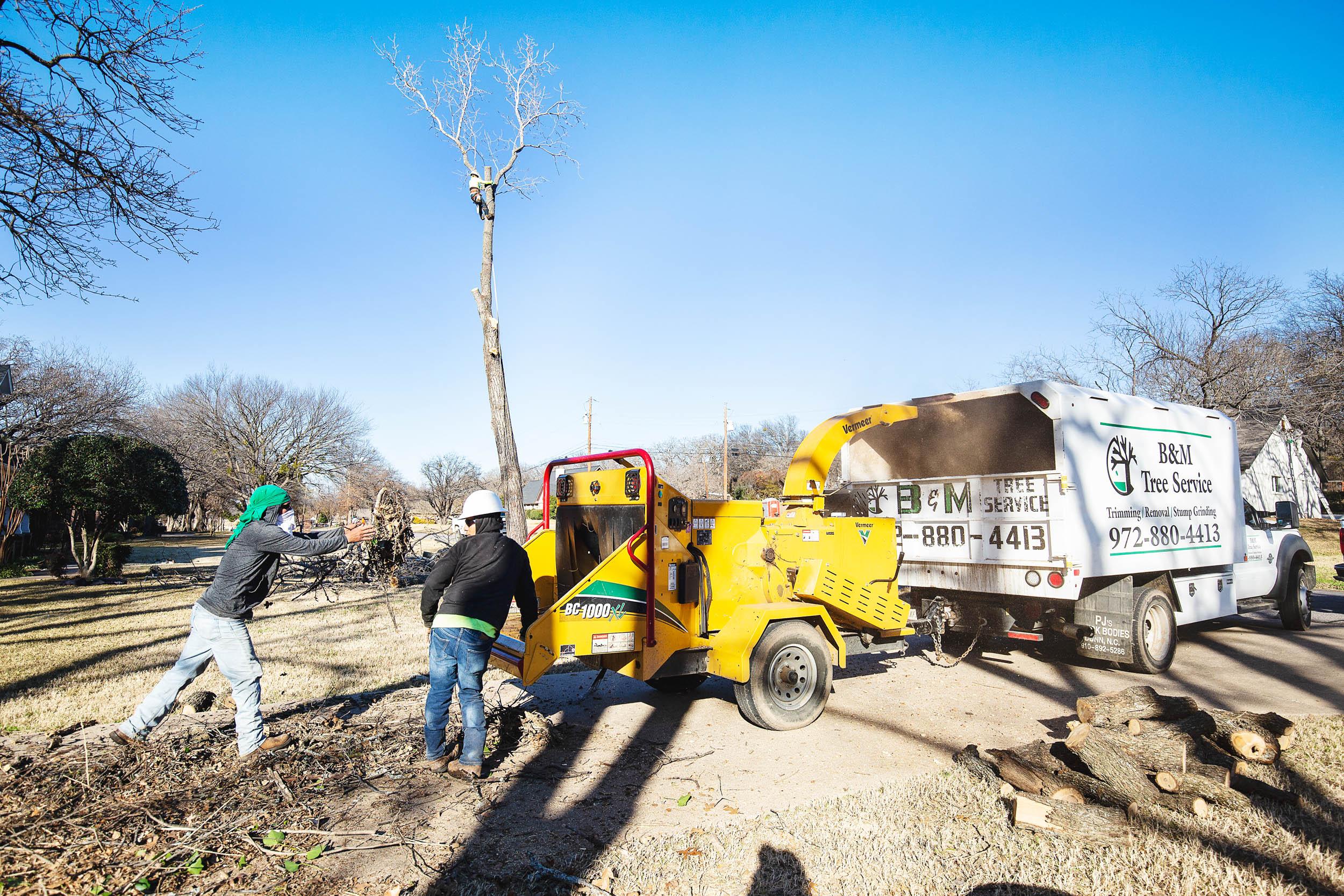 Tree Trim Service in keller Texas (37 of 49).jpg