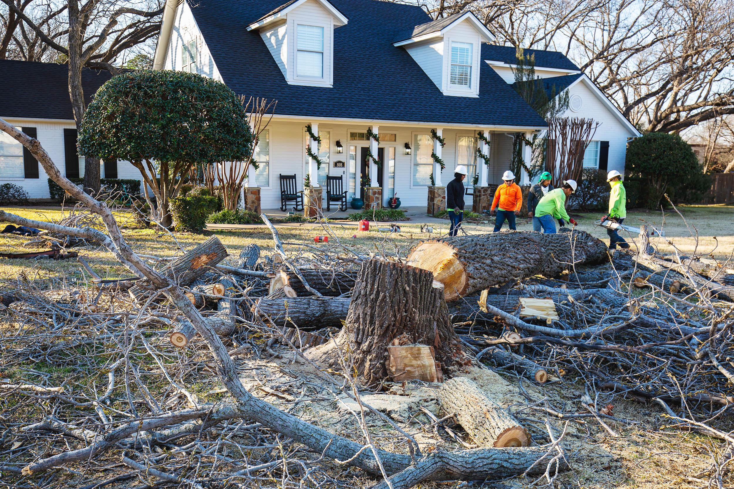 Tree Trim Service in keller Texas (41 of 49).jpg