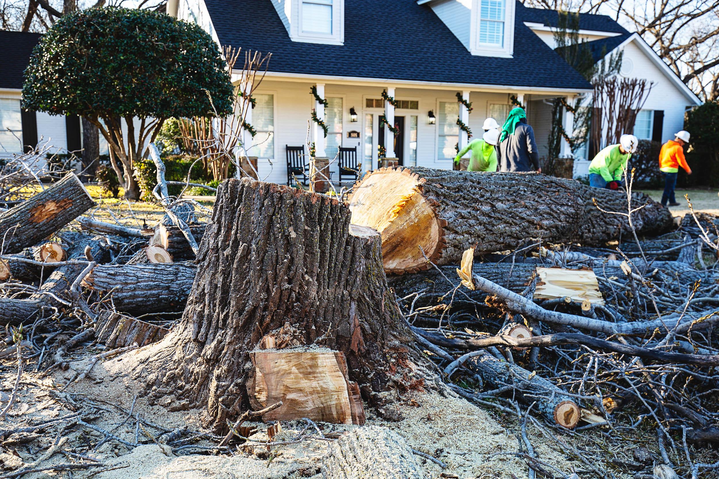 Tree Trim Service in keller Texas (42 of 49).jpg