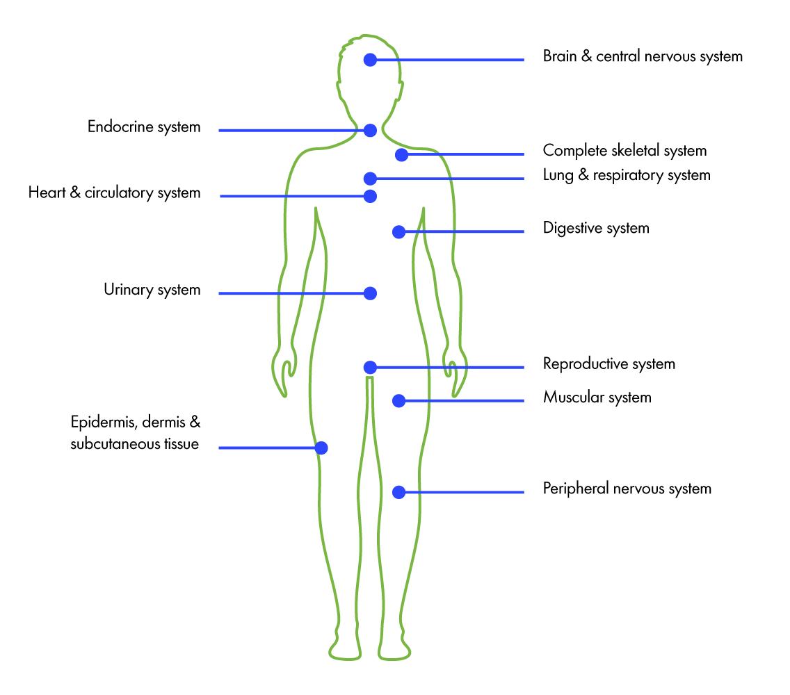 EeroNaturals-home-cbdreceptors-1.png
